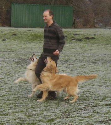Doynton Dog Training